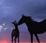 属马的人2014本命年卧室风水布局解析