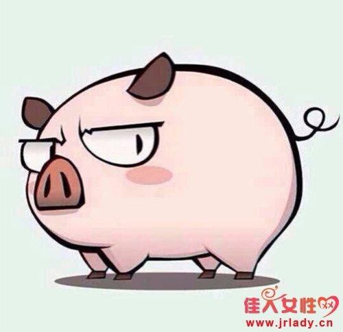 属猪的和什么生肖最配