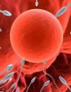 精子和卵子就如何结合的 精子和卵子结合要哪些条件