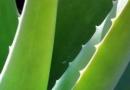 芦荟胶的使用方法 如何用芦荟胶做面膜
