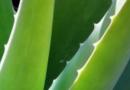 芦荟胶的使用方法 怎么用芦荟胶做面膜