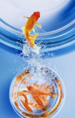 怎样摆放鱼缸才能旺财 养鱼风水有讲究