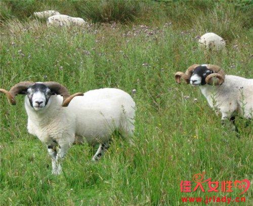 属羊的人什么时辰出生最好