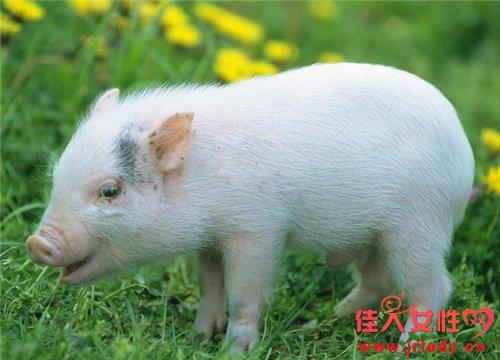 属猪的人的婚姻与命运
