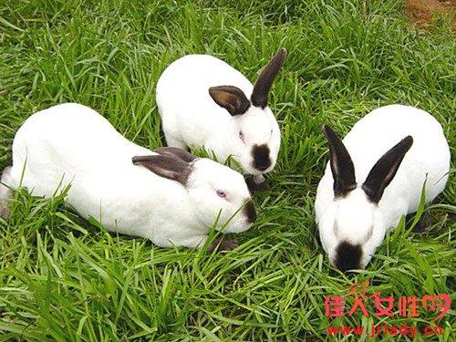 的人今年几岁 生肖兔的五大运势