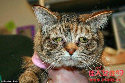 世界上最悲伤的猫图克 脸上总挂着悲伤表情
