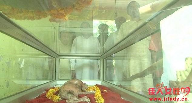 """印度""""人形牛""""诞生:生下来似牛又似人,被村民奉为神物"""