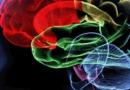 脑细胞死光了会怎么样 防止脑细胞老化吃什么食物