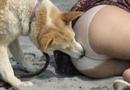 人兽交 美女全裸与狗性交不雅画面曝光