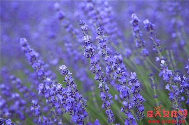 薰衣草的花语