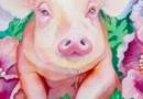 属猪人2017年十二月运势 属猪人2017年健康运势测算