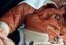 男童被剪断生殖器 17个月男童下体被剪断太残忍
