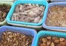 贝壳类海鲜的营养价值  贝壳类海鲜图片及名称