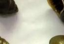 哪些螺易携带寄生虫 孕妇能吃螺吗