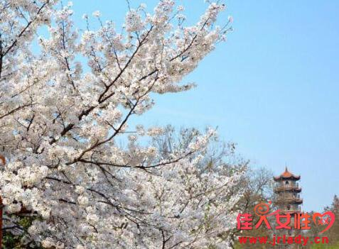 2018武汉大学樱花节预约3月17日开始