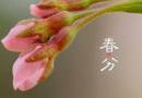 2018春分朋友圈说说大全带图片 唯美古风qq签名大全