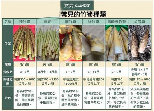 生活中常见可以食用竹笋的种类图片及名称